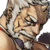 Hougen 4star icon.png